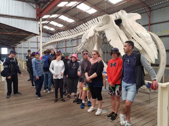 Students Whale bones